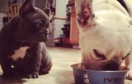 Otis & Cash