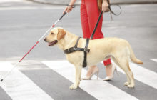 Service Animals in Salons & the Americans with Disabilities Act
