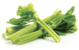 Salads & Tanning